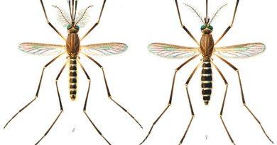 Soorten muggen in Nederland
