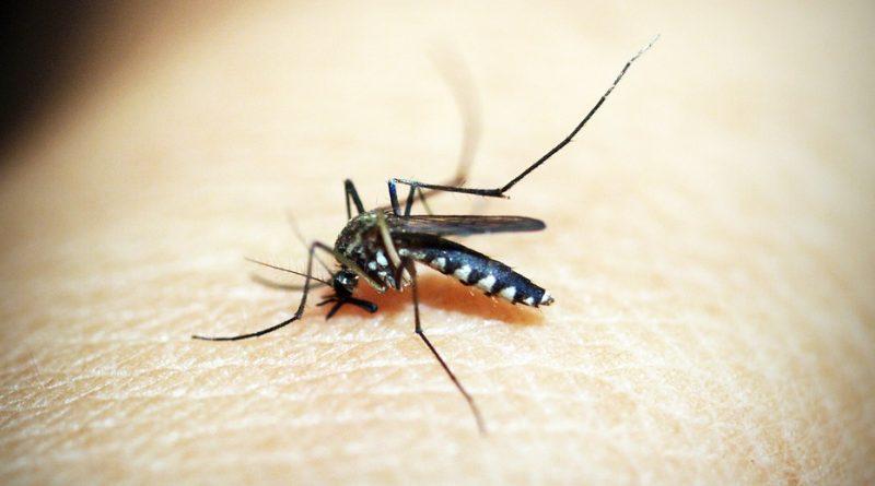 Muggen zijn nuttig