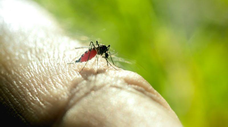 muggen overlast aanhoudend