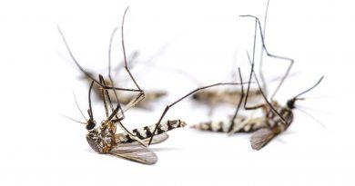 muggenvinder Bzigo